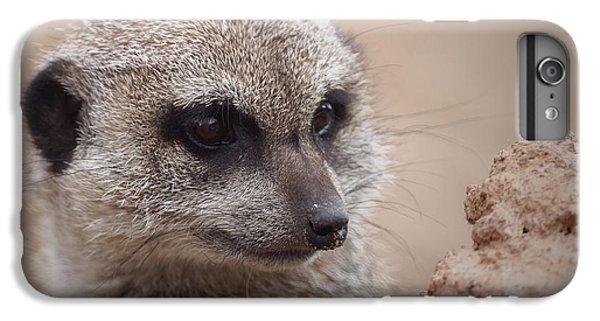 Meerkat 7 IPhone 6 Plus Case by Ernie Echols