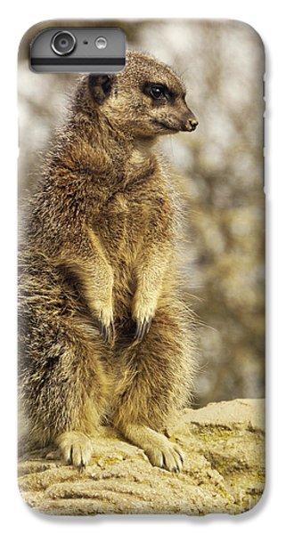 Meerkat iPhone 6 Plus Case - Meerkat On Hill by Pixel Chimp