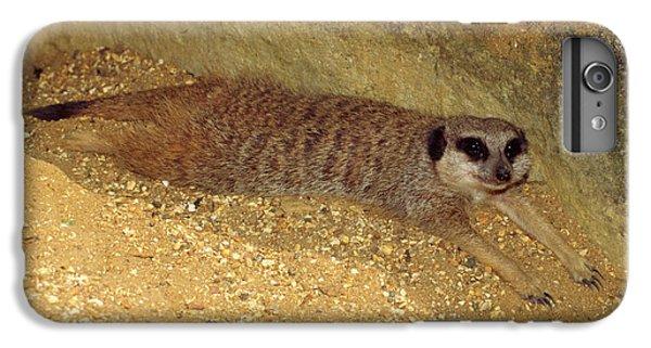 Meerkat iPhone 6 Plus Case - Meerkat Resting by Nigel Downer