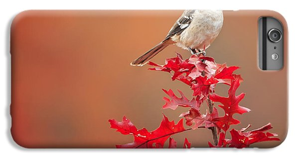 Mockingbird iPhone 6 Plus Case - Mockingbird Autumn Square by Bill Wakeley