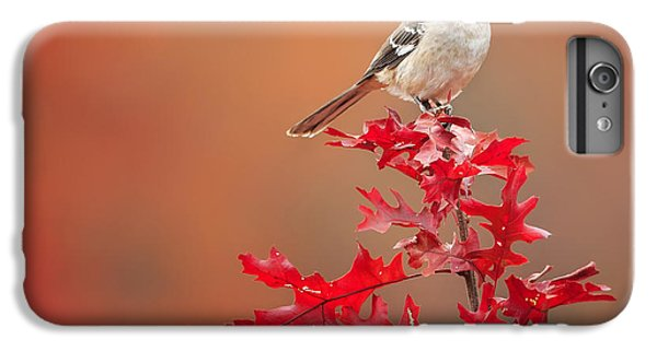 Mockingbird Autumn Square IPhone 6 Plus Case by Bill Wakeley