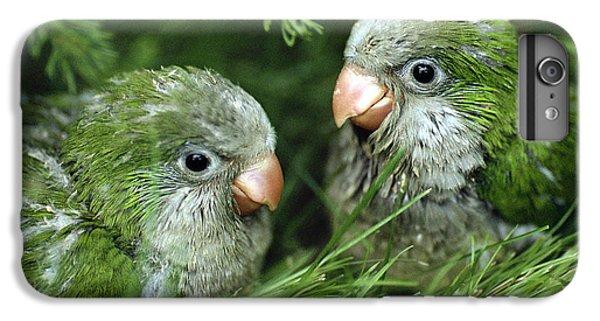 Monk Parakeet Chicks IPhone 6 Plus Case by Paul J. Fusco
