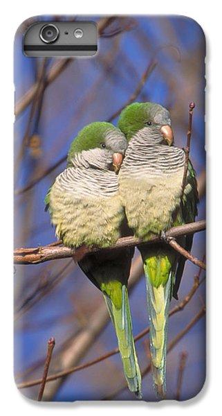 Monk Parakeets IPhone 6 Plus Case by Paul J. Fusco