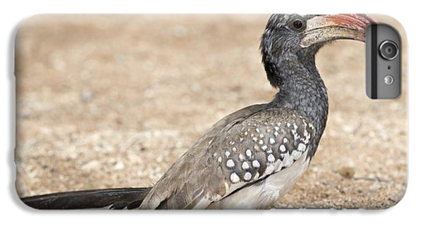 Monteiro's Hornbill Foragin IPhone 6 Plus Case