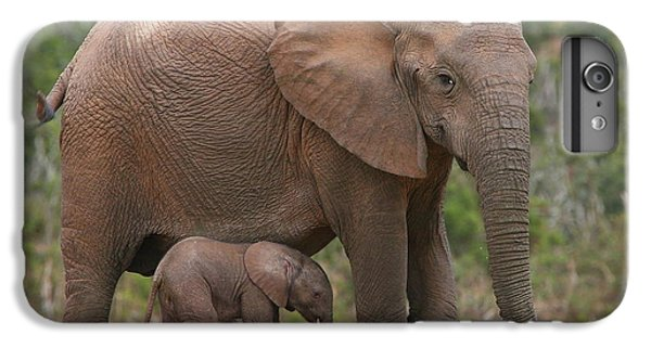 Elephant iPhone 6 Plus Case - Mother And Calf by Bruce J Robinson
