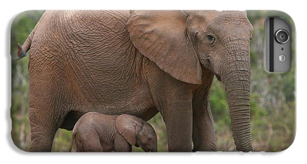 Mother And Calf IPhone 6 Plus Case
