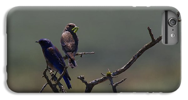 Mountain Bluebird Pair IPhone 6 Plus Case by Mike  Dawson