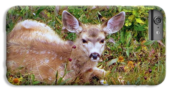 IPhone 6 Plus Case featuring the photograph Mule Deer Fawn by Karen Shackles