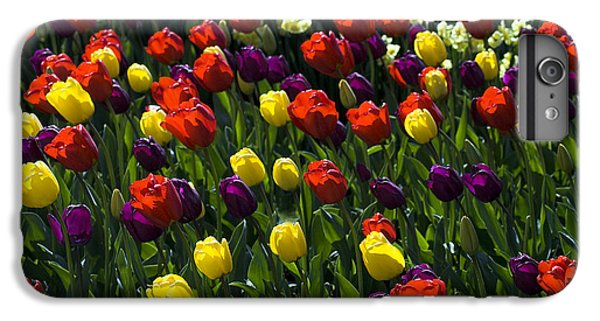 IPhone 6 Plus Case featuring the photograph Multicolored Tulips At Tulip Festival. by Yulia Kazansky