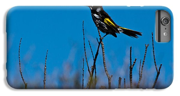 IPhone 6 Plus Case featuring the photograph New Holland Honeyeater by Miroslava Jurcik