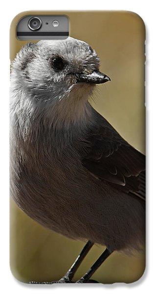Northern Mockingbird IPhone 6 Plus Case by Ernie Echols