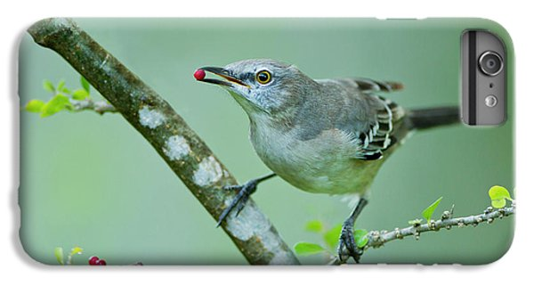 Mockingbird iPhone 6 Plus Case - Northern Mockingbird (mimus Polyglottos by Larry Ditto