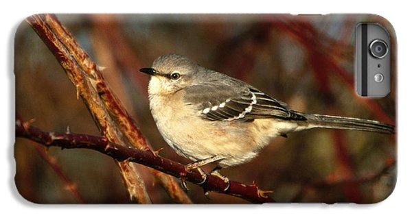 Northern Mockingbird Mimus Polyglottos IPhone 6 Plus Case by Paul J. Fusco