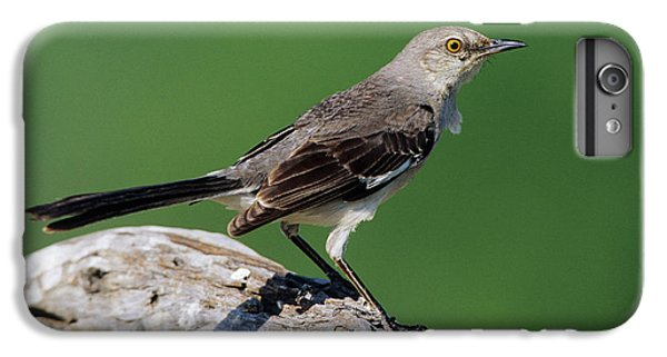 Mockingbird iPhone 6 Plus Case - Northern Mockingbird (mimus Polyglottos by Richard and Susan Day
