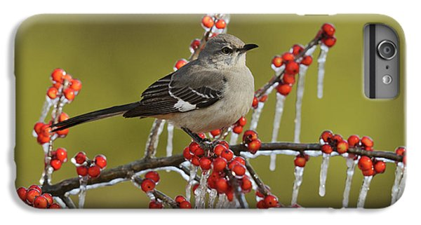 Mockingbird iPhone 6 Plus Case - Northern Mockingbird (mimus Polyglottos by Rolf Nussbaumer