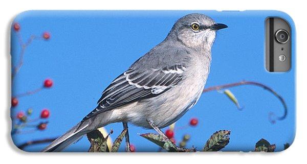Northern Mockingbird IPhone 6 Plus Case by Paul J. Fusco