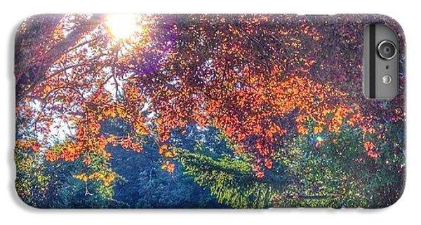 Sunny iPhone 6 Plus Case - Oak Street Early Evening Light by Anna Porter