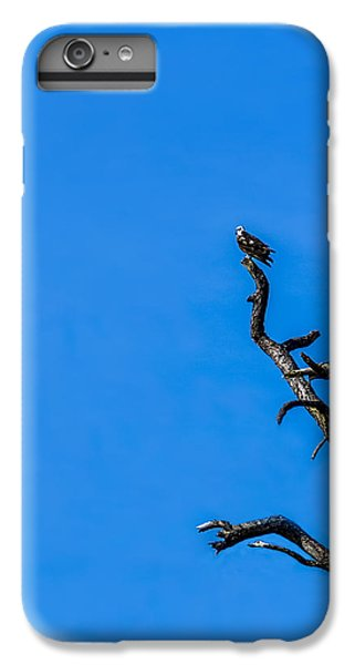 Osprey iPhone 6 Plus Case - On Point by Marvin Spates