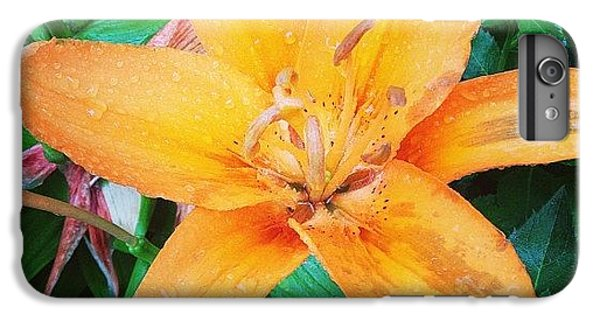 Orange iPhone 6 Plus Case - #orange #lily After The #rain Is Still by Teresa Mucha