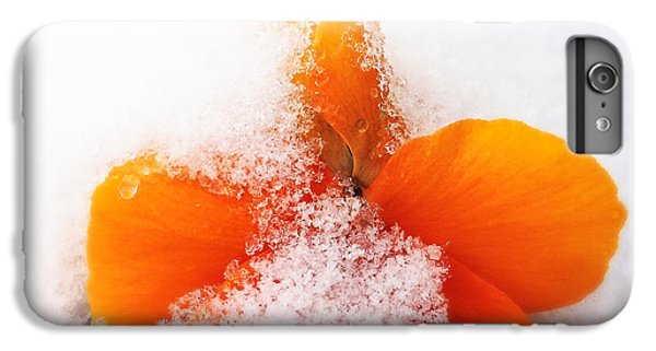 Orange iPhone 6 Plus Case - Orange Pansy Flower Covered With White Snow In Spring by Matthias Hauser