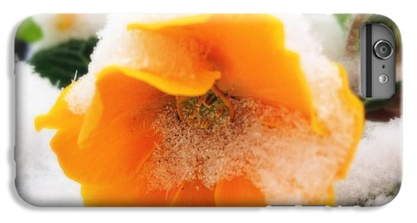 Orange iPhone 6 Plus Case - Orange Spring Flower With Snow by Matthias Hauser
