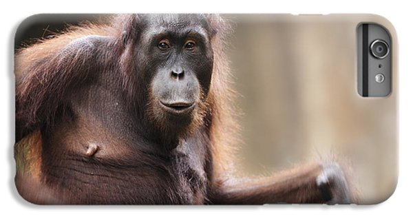 Orangutan IPhone 6 Plus Case by Richard Garvey-Williams