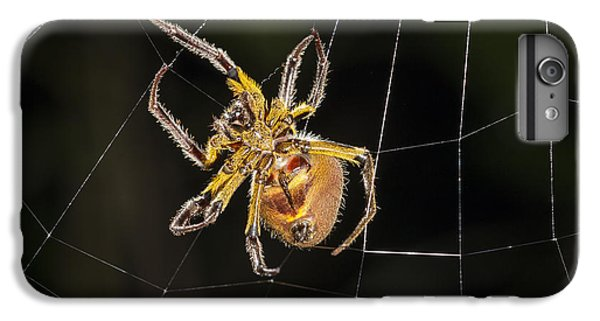 Orb-weaver Spider In Web Panguana IPhone 6 Plus Case by Konrad Wothe