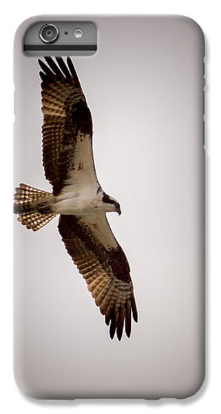 Osprey IPhone 6 Plus Case by Ernie Echols