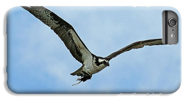 Osprey Nest Building IPhone 6 Plus Case