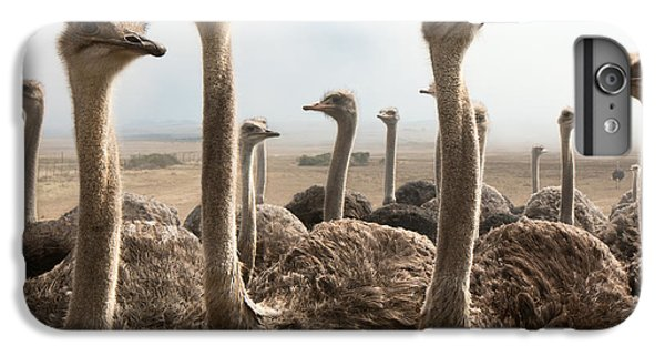 Ostrich Heads IPhone 6 Plus Case by Johan Swanepoel