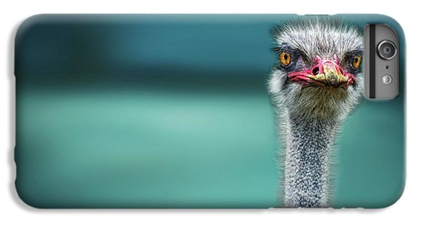 Ostrich Protecting Two Poor Chicken From The Wind IPhone 6 Plus Case