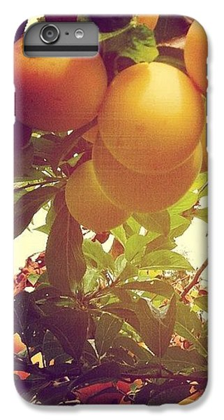 Orange iPhone 6 Plus Case - Our Plum Tree Is Loaded This Year...any by Blenda Studio