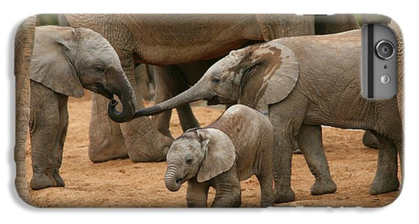 Pachyderm Pals IPhone 6 Plus Case