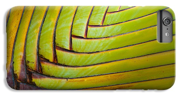 Palm Tree Leafs IPhone 6 Plus Case by Sebastian Musial