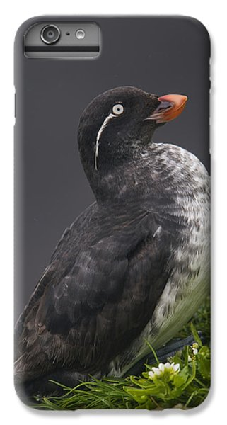 Parakeet Auklet Sitting In Green IPhone 6 Plus Case by Milo Burcham
