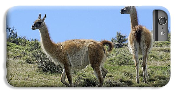 Llama iPhone 6 Plus Case - Patagonian Guanacos by Michele Burgess