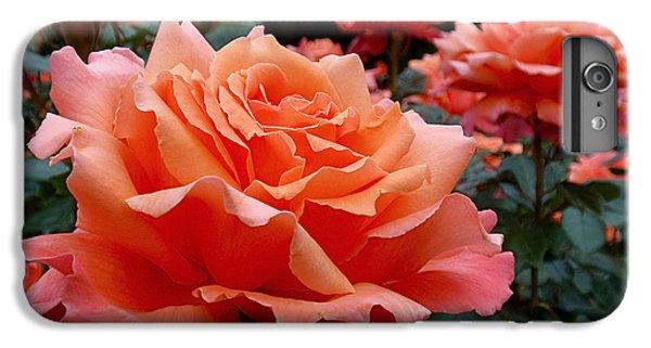 Peach Roses IPhone 6 Plus Case