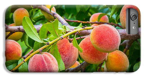 Peaches IPhone 6 Plus Case by Inge Johnsson