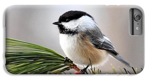 Chickadee iPhone 6 Plus Case - Pine Chickadee by Christina Rollo