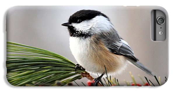 Pine Chickadee IPhone 6 Plus Case by Christina Rollo