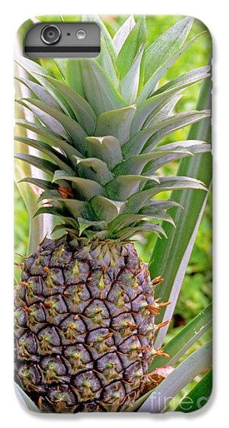 Pineapple Plant IPhone 6 Plus Case
