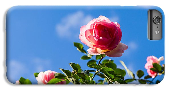 Pink Roses - Featured 3 IPhone 6 Plus Case by Alexander Senin