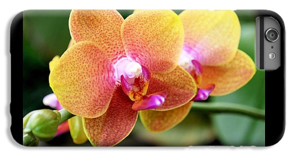 Pink Yellow Orchid IPhone 6 Plus Case