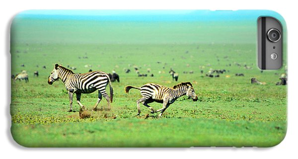 Playfull Zebras IPhone 6 Plus Case by Sebastian Musial