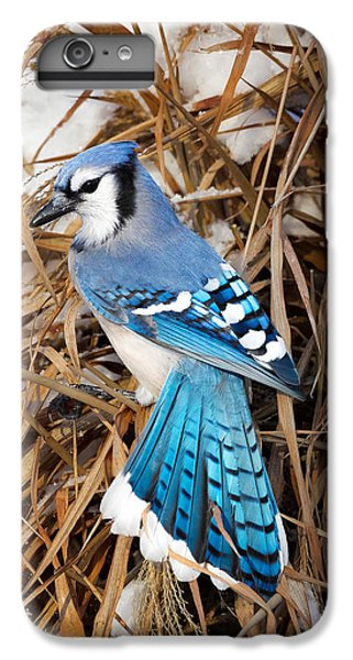 Bluejay iPhone 6 Plus Case - Portrait Of A Blue Jay by Bill Wakeley