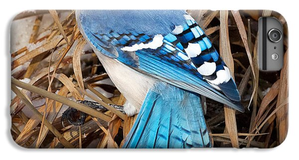 Bluejay iPhone 6 Plus Case - Portrait Of A Blue Jay Square by Bill Wakeley