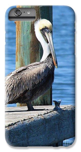 Pelican iPhone 6 Plus Case - Posing Pelican by Carol Groenen