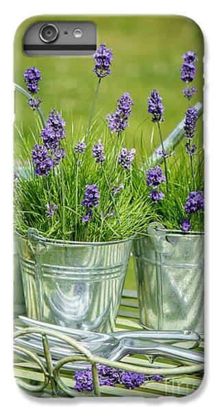 Garden iPhone 6 Plus Case - Pots Of Lavender by Amanda Elwell