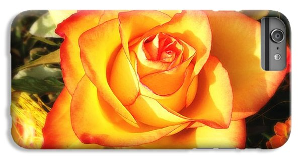 Orange iPhone 6 Plus Case - Pretty Orange Rose by Matthias Hauser