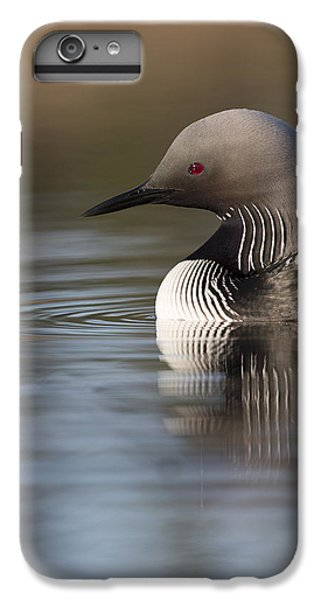 Profile Of A Pacific Loon IPhone 6 Plus Case by Tim Grams